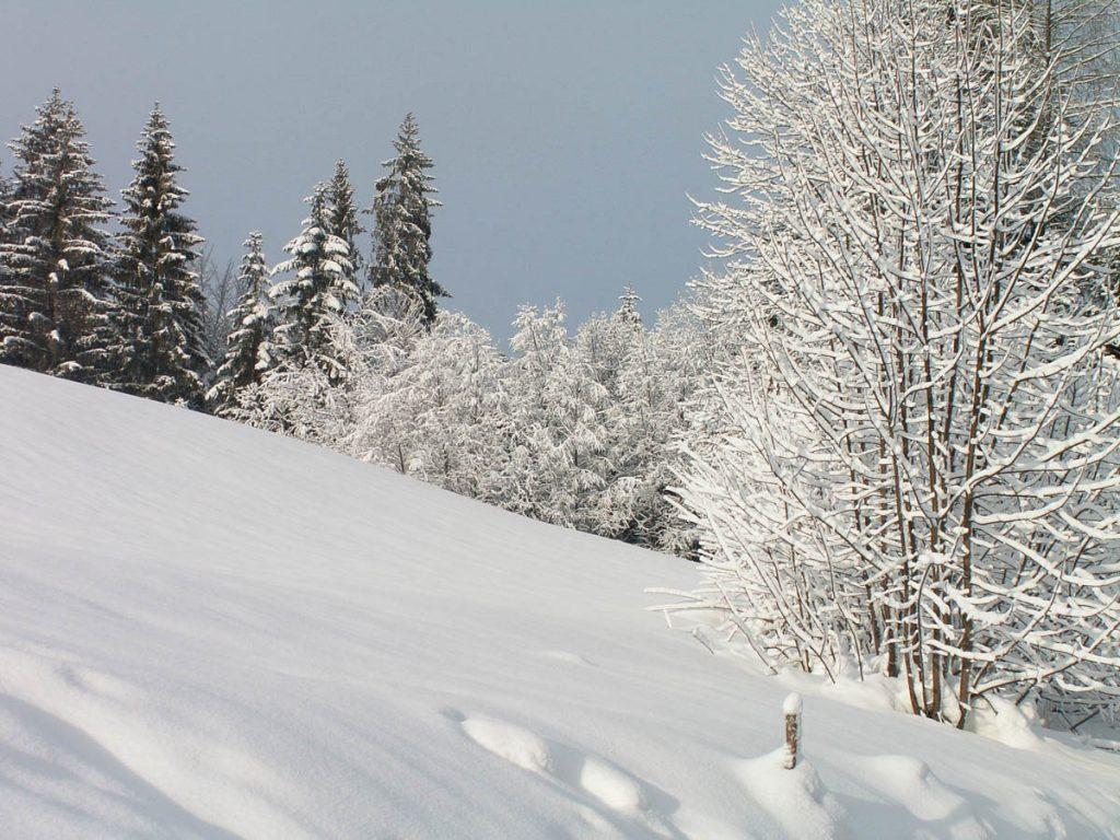 Winter Wonderland,Fieberbrunn, Tirol, Oostenrijk (2005)