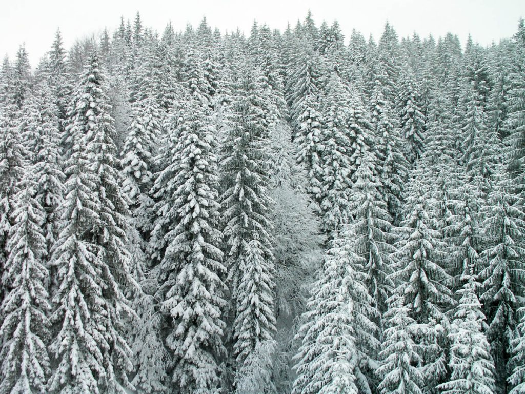 Besneeuwde bomen,Fieberbrunn, Tirol, Oostenrijk (2005)