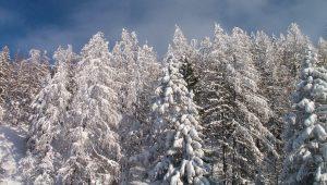 Verse sneeuw :-)