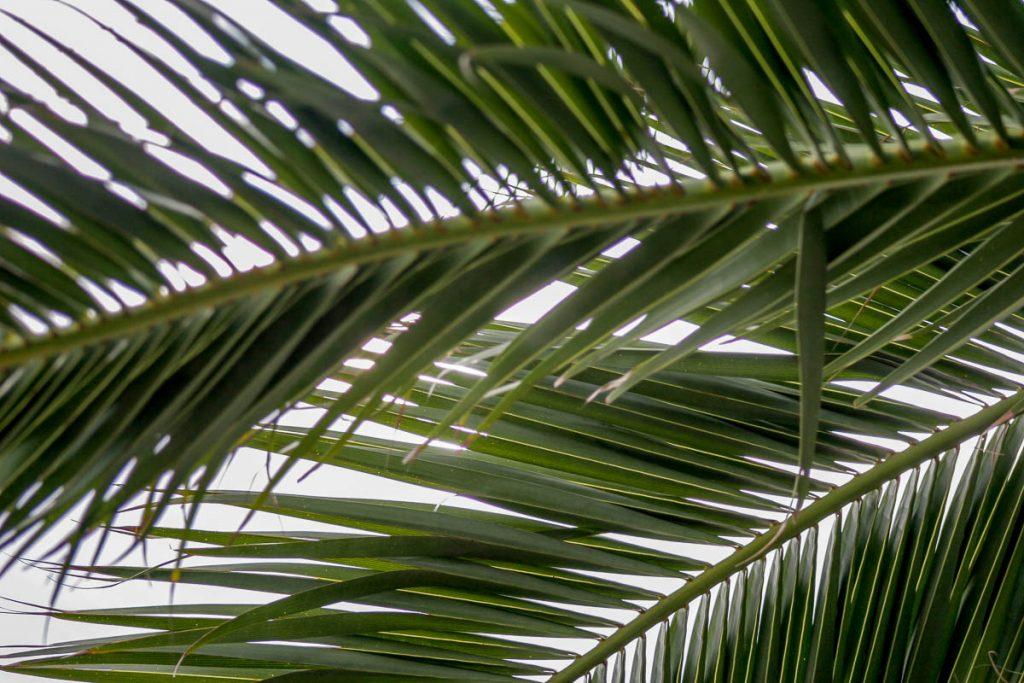 Palmbladeren,Port Vell, Barcelona, Catalonië, Spanje (2005)