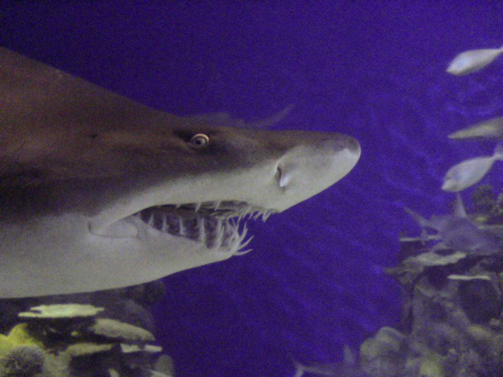 Haai lacht naar de camera,Downtown Aquarium, Denver, Colorado, Verenigde Staten (2006)