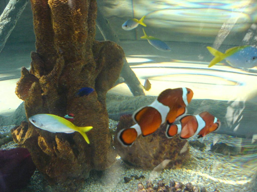 Nemo!,Downtown Aquarium, Denver, Colorado, Verenigde Staten (2006)