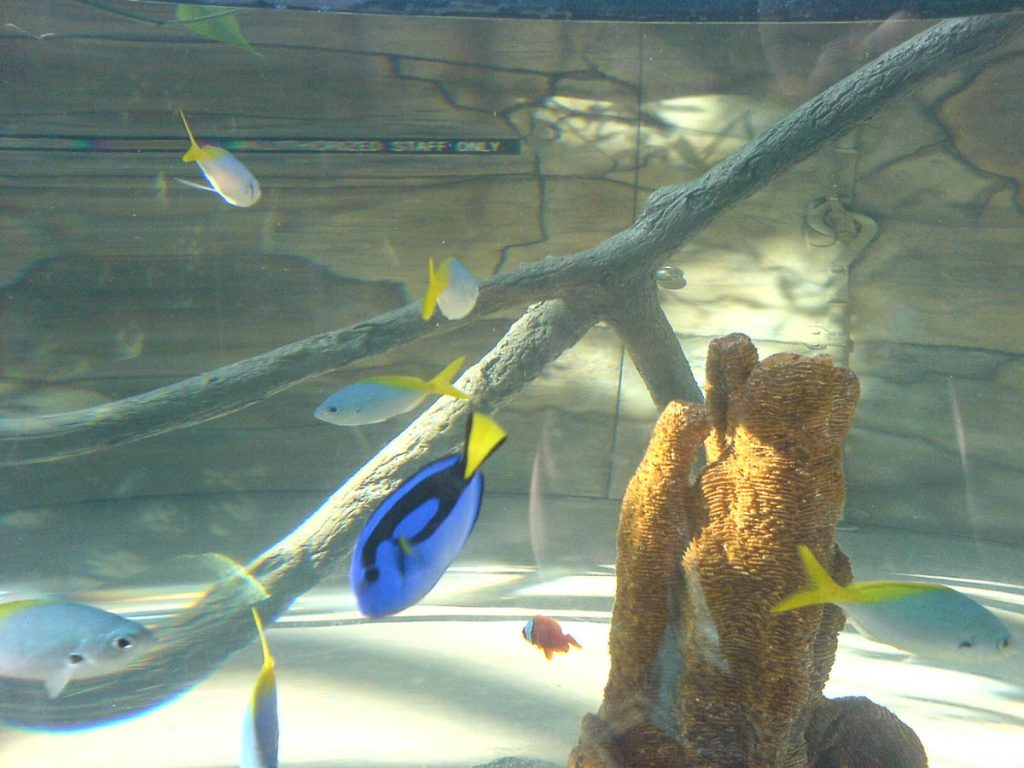 Dory,Downtown Aquarium, Denver, Colorado, Verenigde Staten (2006)