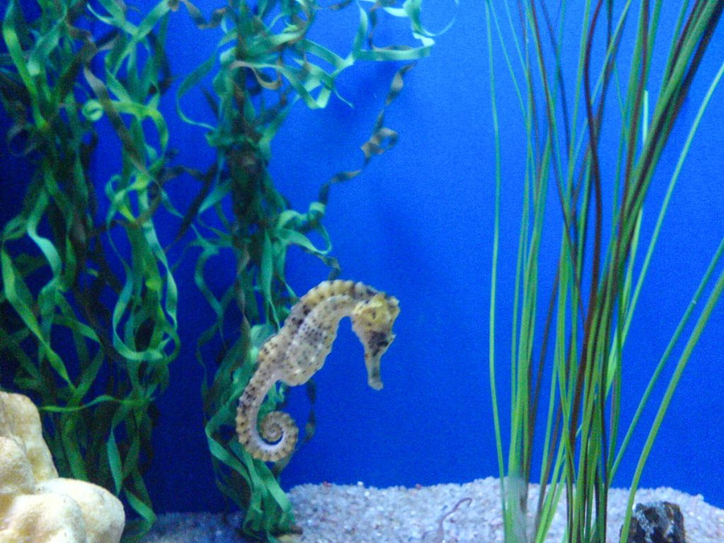 Zeepaardje,Downtown Aquarium, Denver, Colorado, Verenigde Staten (2006)