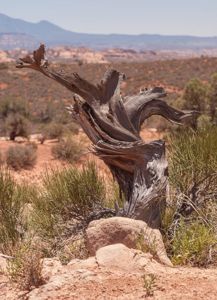 Boomstronk,Arches National Park, Utah, Verenigde Staten (2006)