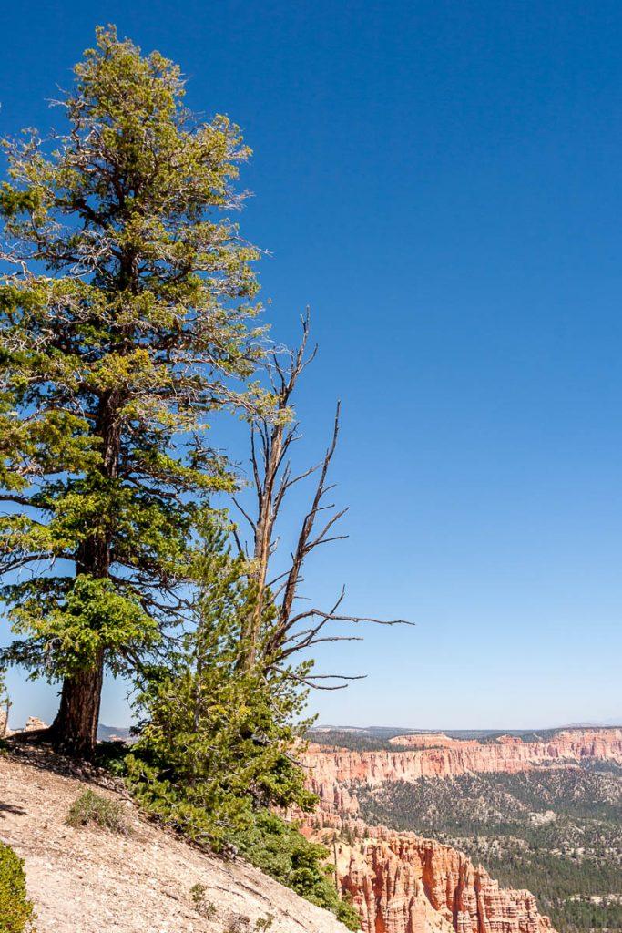 Bomen,Bryce Canyon National Park, Utah, Verenigde Staten (2006)