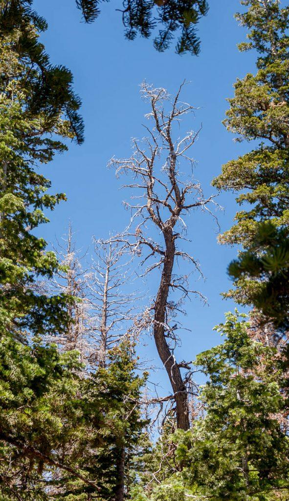 Doorkijkje,Bryce Canyon National Park, Utah, Verenigde Staten (2006)