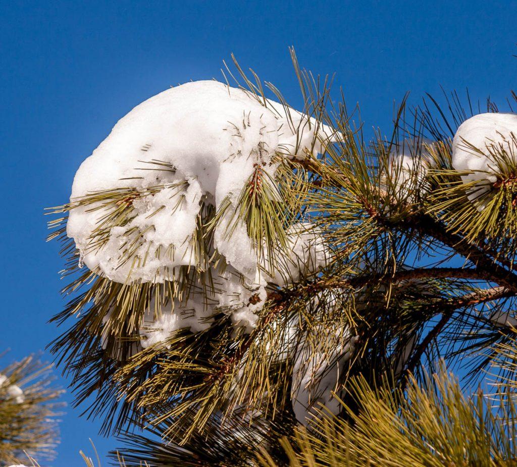 Sneeuw,Sunset Crater Vulcano National Monument, Arizona, Verenigde Staten (2006)