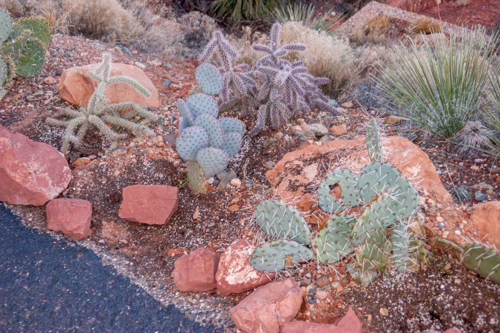 Cacti,Sedona, Arizona, United States (2007)