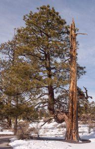Deze boom geeft niet op