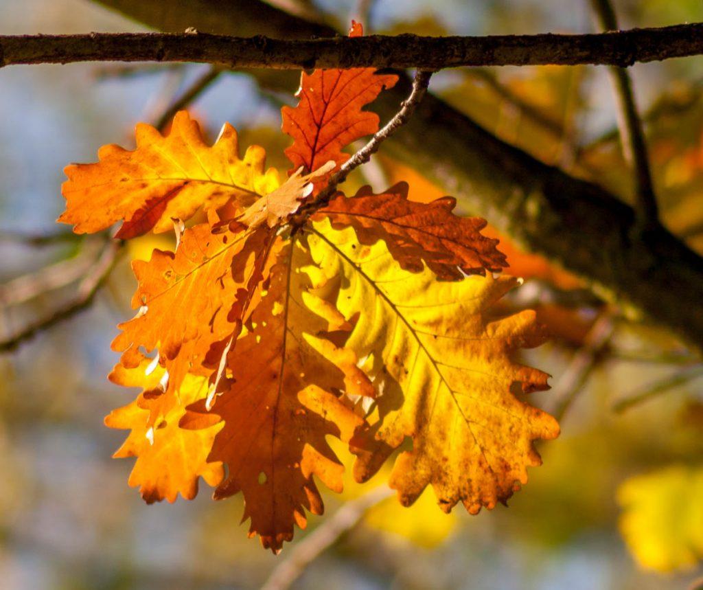 Herfst,Zuiderpark, Den Haag, Zuid-Holland (2007)