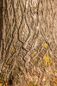 Patroon in deze boom