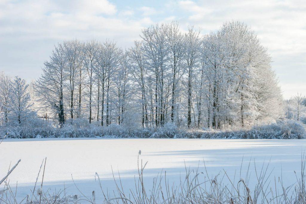 Winterse taferelen,Natuurpark Lelystad, Flevoland, Flevoland (2010)