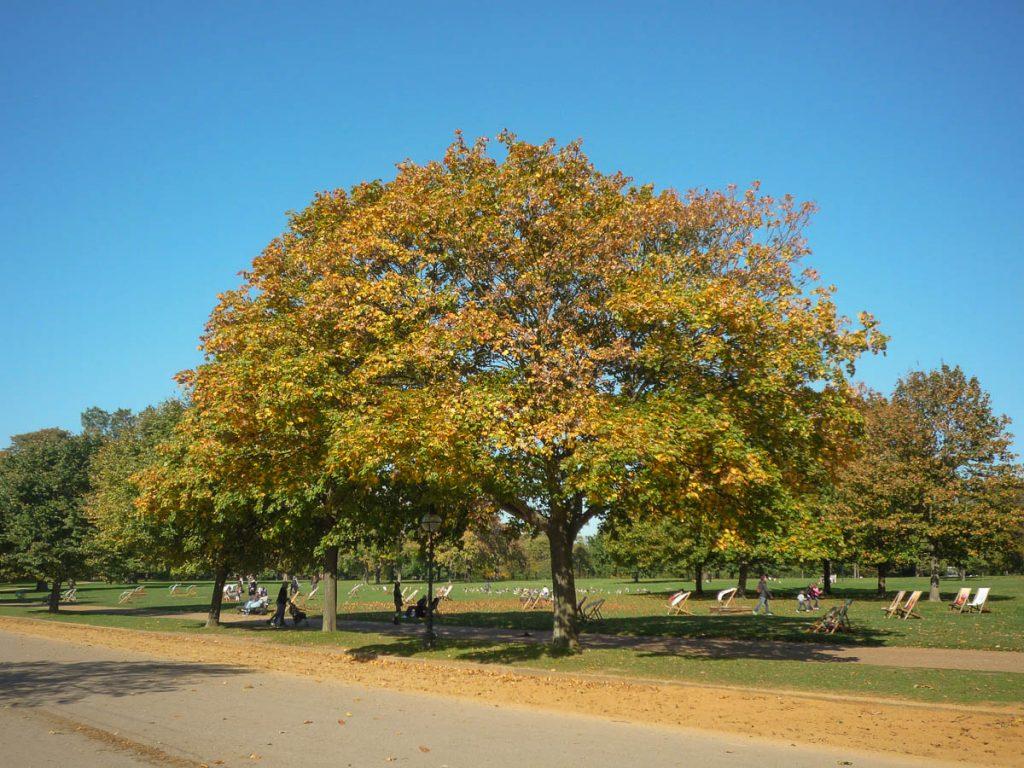 Herfstkleuren,Hyde Park, Londen, Engeland, Verenigd Koninkrijk (2010)