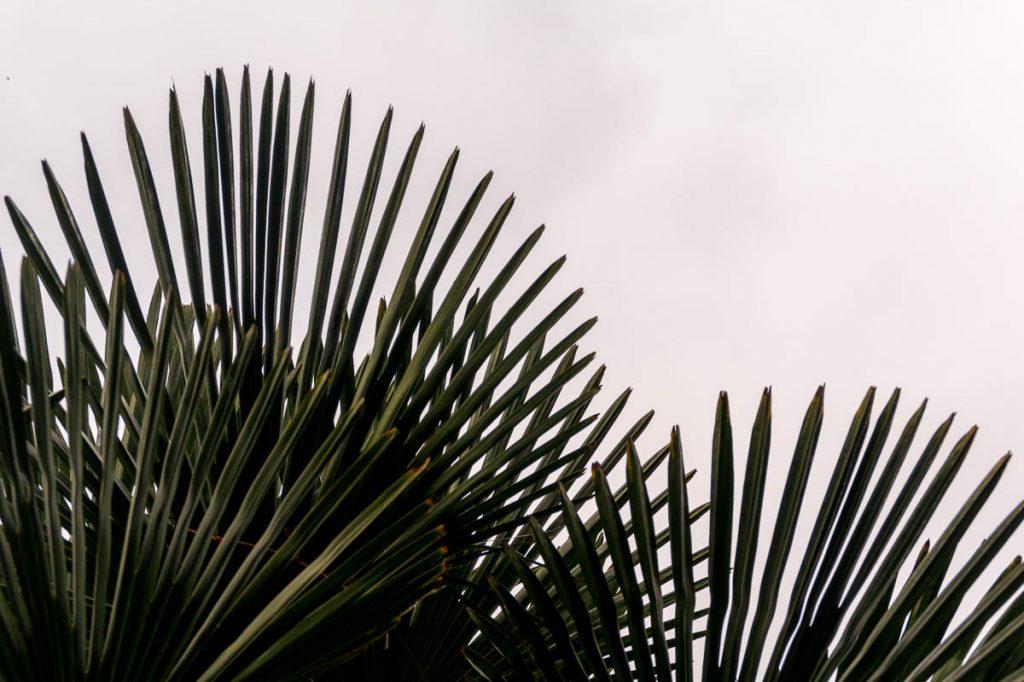Palmbladeren,London Zoo, Londen, Engeland, Verenigd Koninkrijk (2010)