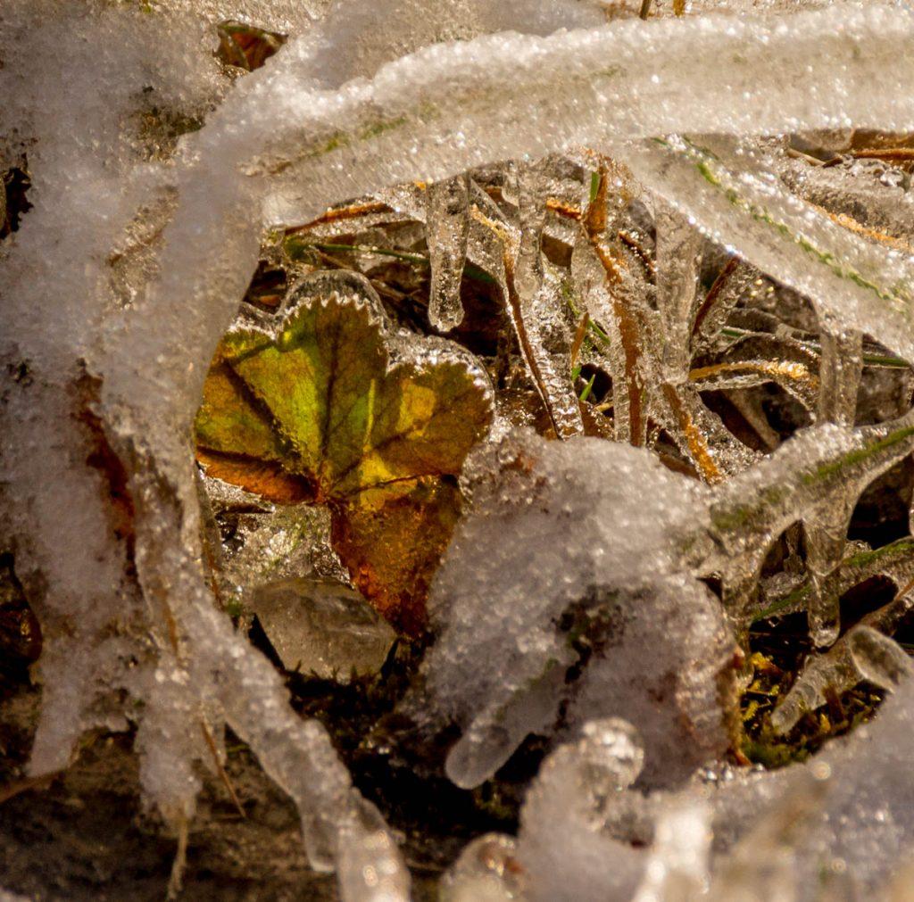 Bevroren herfst,Gullfoss, Zuid IJsland, IJsland (2010)