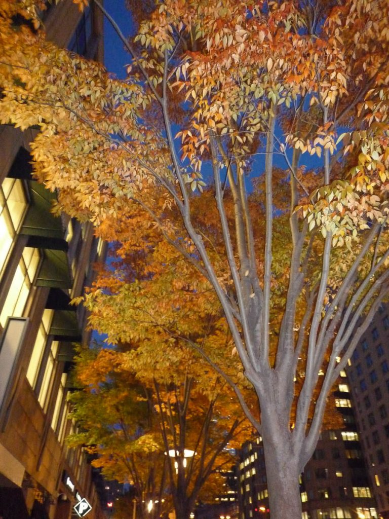Herfst!,Boston, Massachussetts, Verenigde Staten (2010)