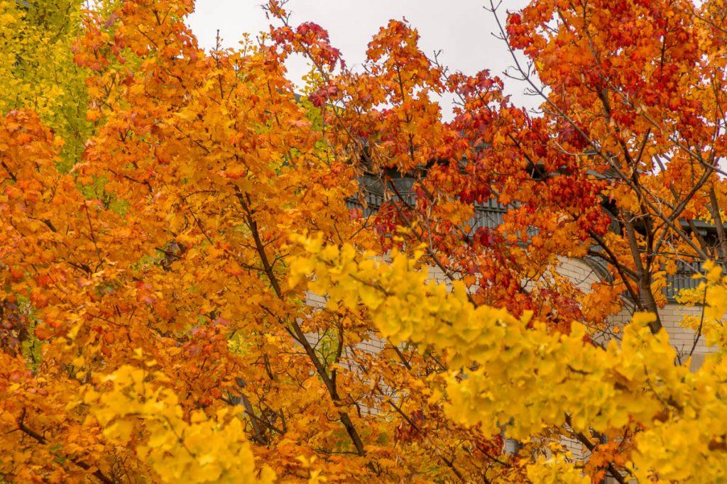 Herfst,Titus Sparrow Park, Boston, Massachussetts, Verenigde Staten (2010)