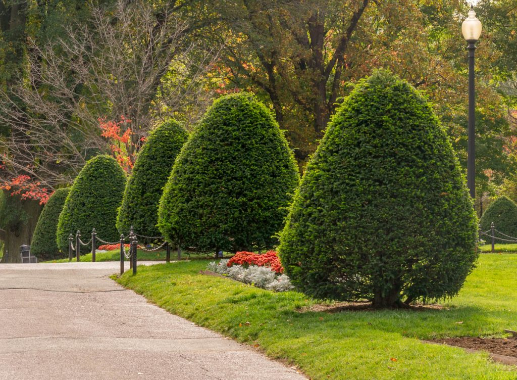Kegelboompjes,Boston Public Garden, Boston, Massachussetts, Verenigde Staten (2010)