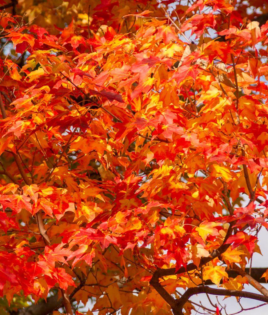 Herfst,Boston Public Garden, Boston, Massachussetts, Verenigde Staten (2010)