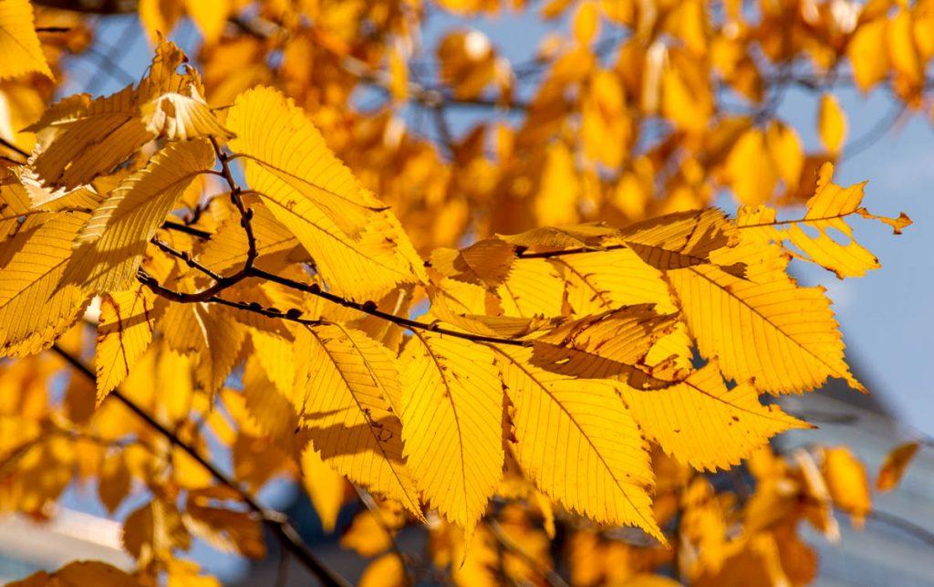Herfst,Boston Common, Boston, Massachussetts, Verenigde Staten (2010)