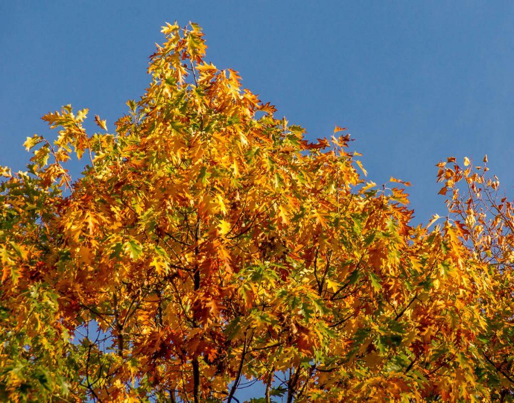 Herfst,Granary Burying Ground, Boston, Massachussetts, Verenigde Staten (2010)