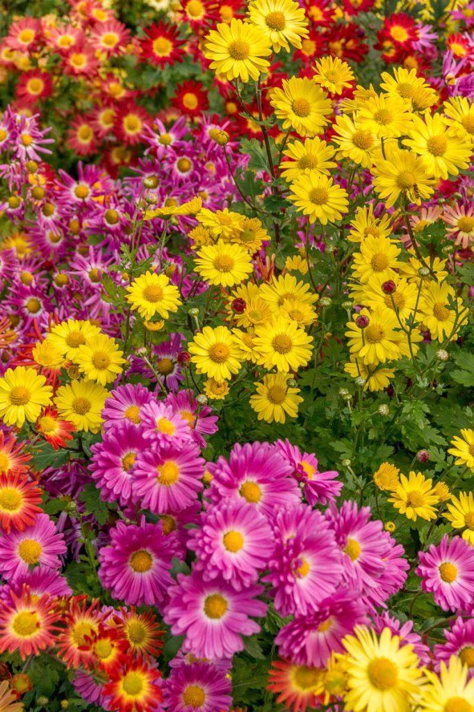 Bloemen,Central Park, New York, New York, Verenigde Staten (2010)
