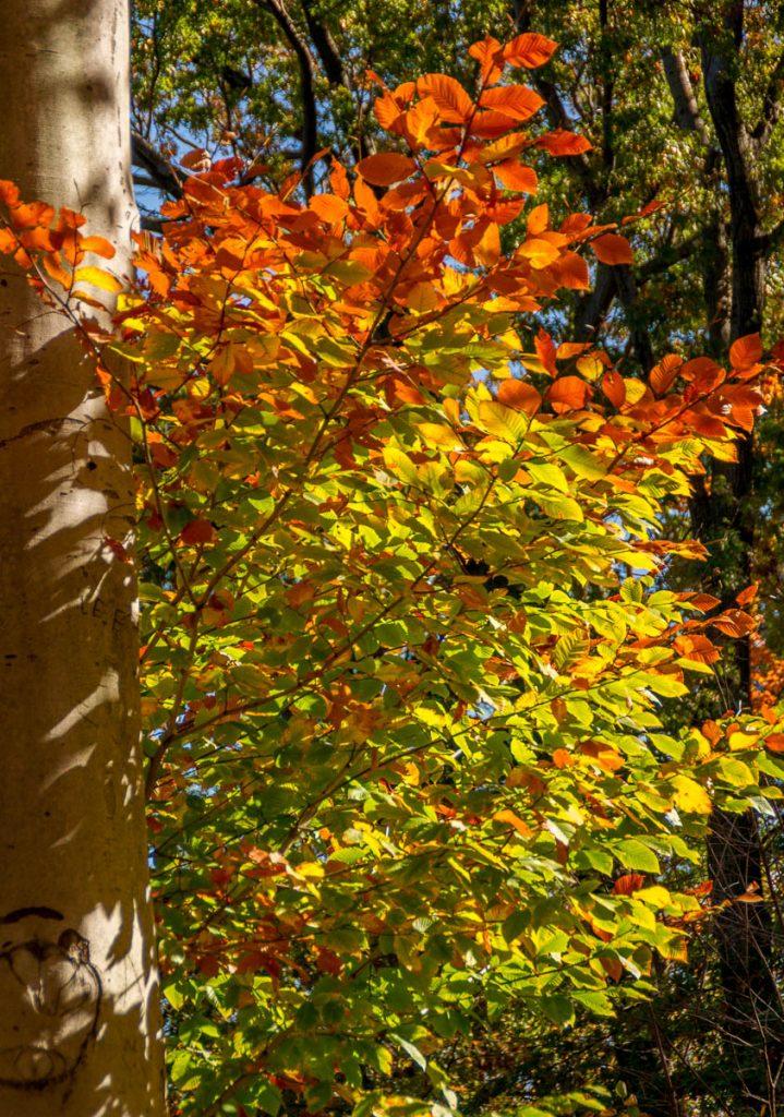 Herfst in Central Park,Central Park, New York, New York, Verenigde Staten (2010)