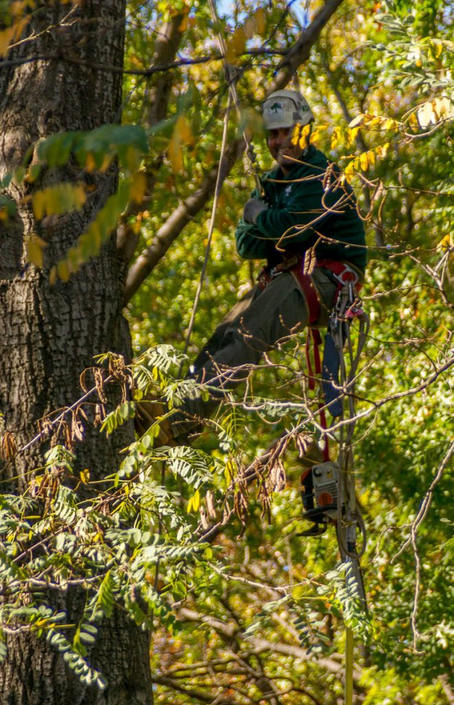 Men in Trees,Central Park, New York, New York, Verenigde Staten (2010)