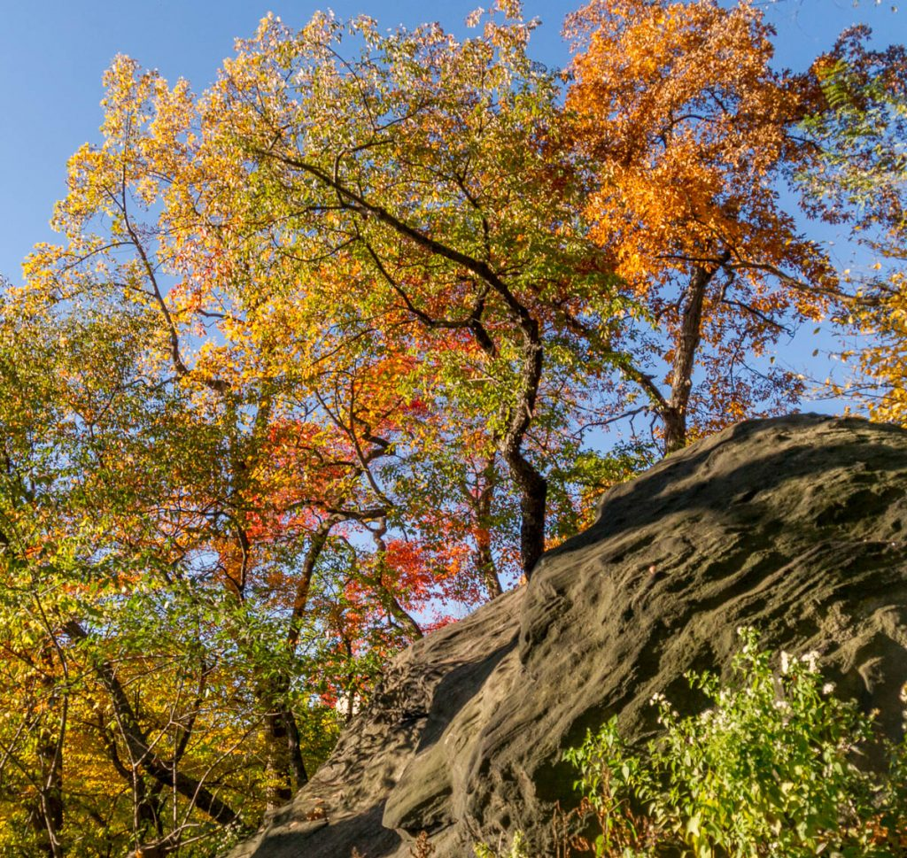 Bomen groeien op keien,Central Park, New York, New York, Verenigde Staten (2010)