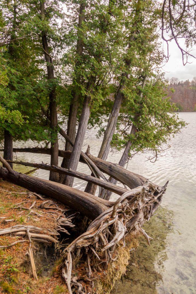 Verstrengeld,Green Lakes State park, New York, Verenigde Staten (2010)