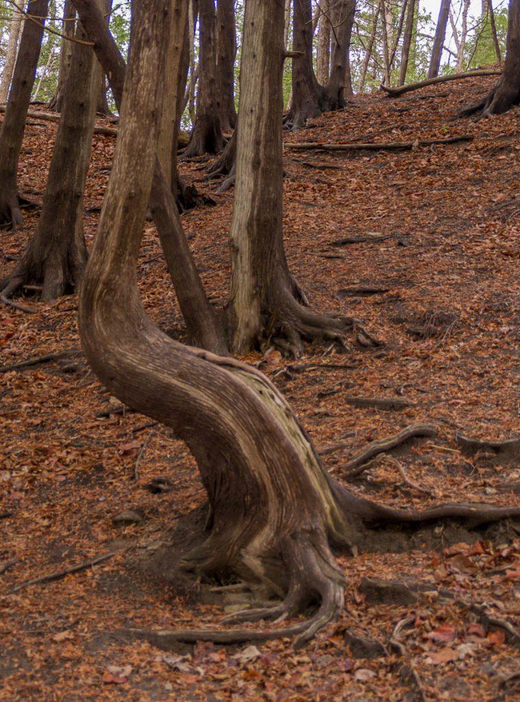 Lijkt wel een stoel,Green Lakes State park, New York, Verenigde Staten (2010)