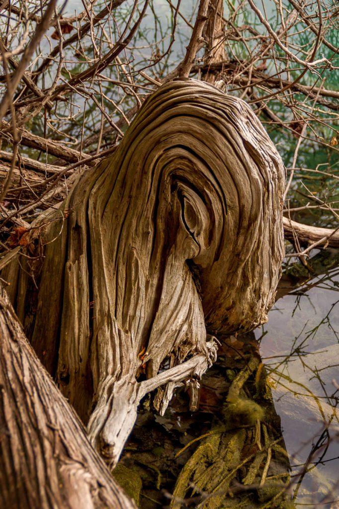 Verdraaid,Green Lakes State park, New York, Verenigde Staten (2010)