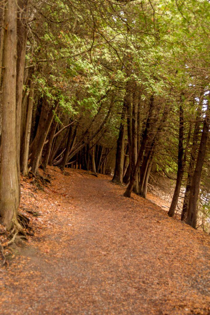 Het pad,Green Lakes State park, New York, Verenigde Staten (2010)