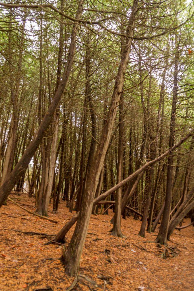 Door elkaar,Green Lakes State park, New York, Verenigde Staten (2010)