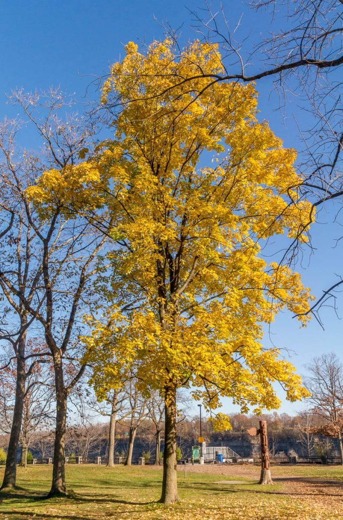 Autumn,Niagara Glen Nature Reserve, Niagara Falls, Ontario, Canada (2010)