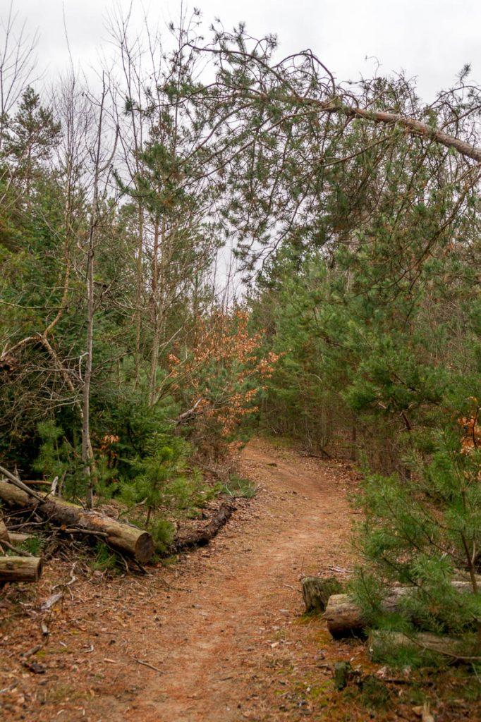 Hike,Angus, Ontario, Canada (2010)