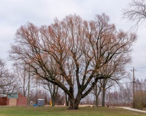 Opvallende boom