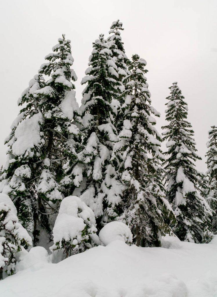 Sneeuw,Whistler, British Columbia, Canada (2010)