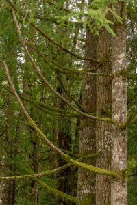 Mossige bomen