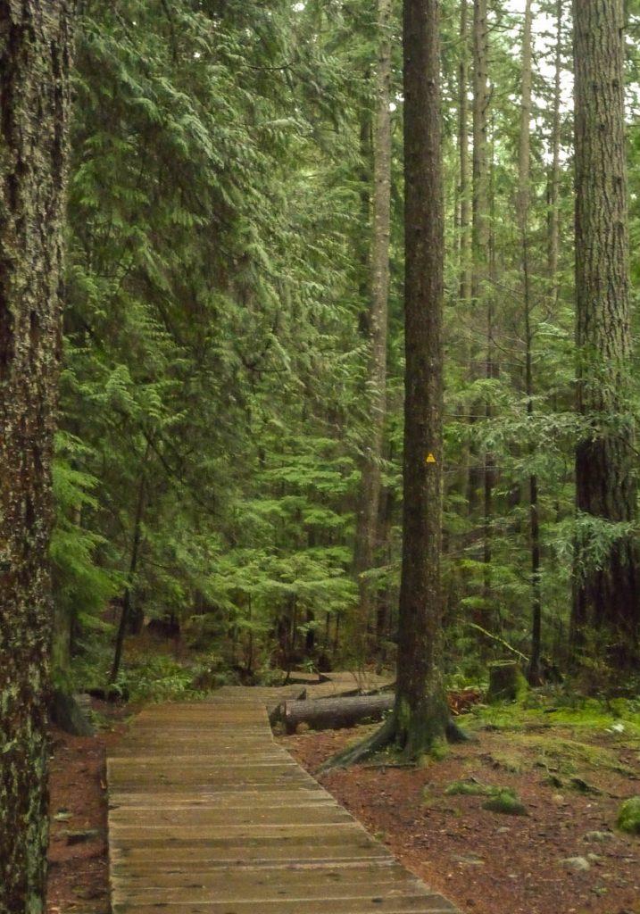 Boardwalk,Lynn Creek Valley, Vancouver, British Columbia, Canada (2010)