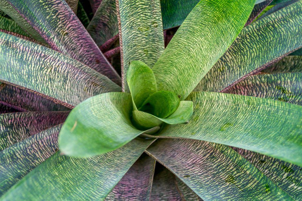 Bromeliad,Conservatory of Flowers, San Francisco, Californië, Verenigde Staten (2010)