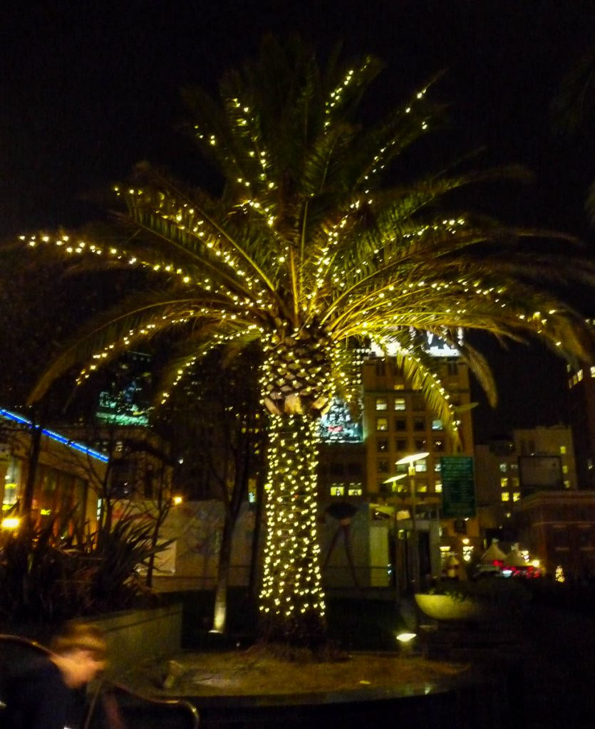 Palmboom,Union Square, San Francisco, Californië, Verenigde Staten (2010)