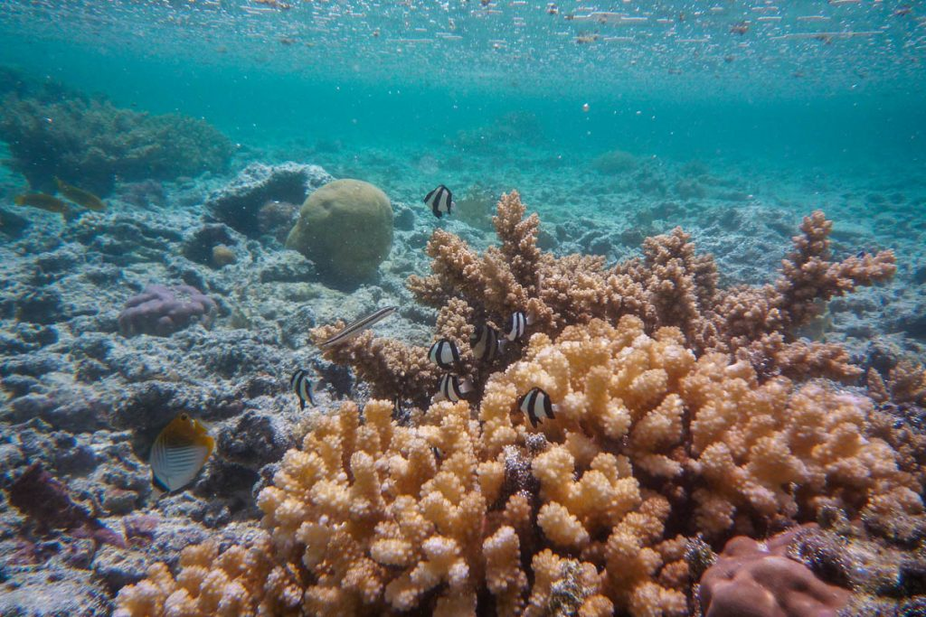 Koraal en vissen,Aroa Beach, Aroa, Rarotonga, Cook Eilanden (2011)
