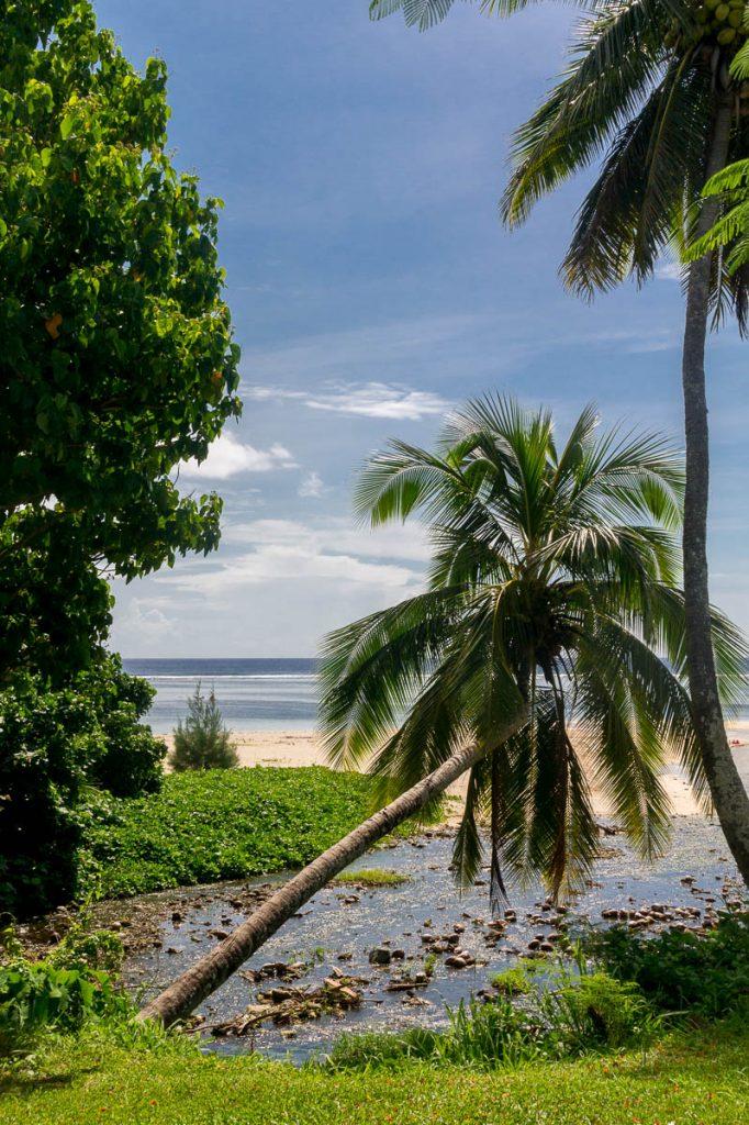Kokospalm (Cocos nucifera),Aroa, Rarotonga, Cook Eilanden (2011)