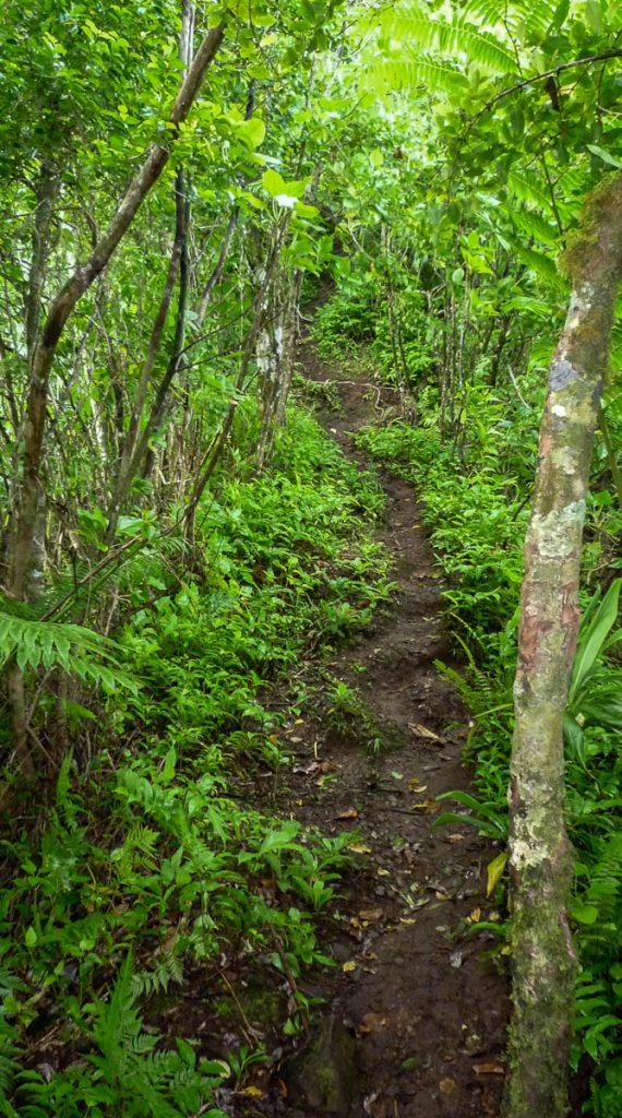 Beetje modderig,Cross Island Trek, Rarotonga, Cook Eilanden (2011)