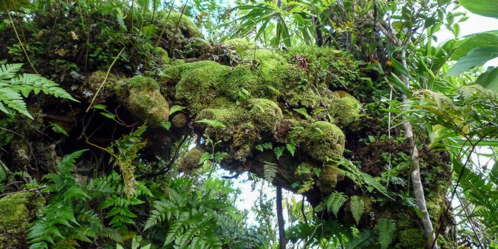 Overhangend mos