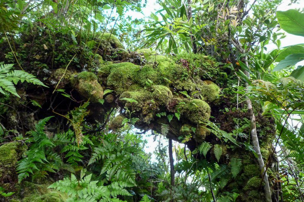 Mossig,Cross Island Trek, Rarotonga, Cook Eilanden (2011)