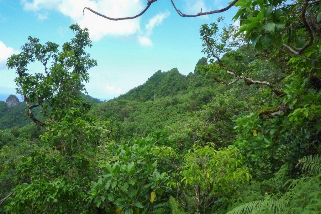 Groen,Cross Island Trek, Rarotonga, Cook Eilanden (2011)