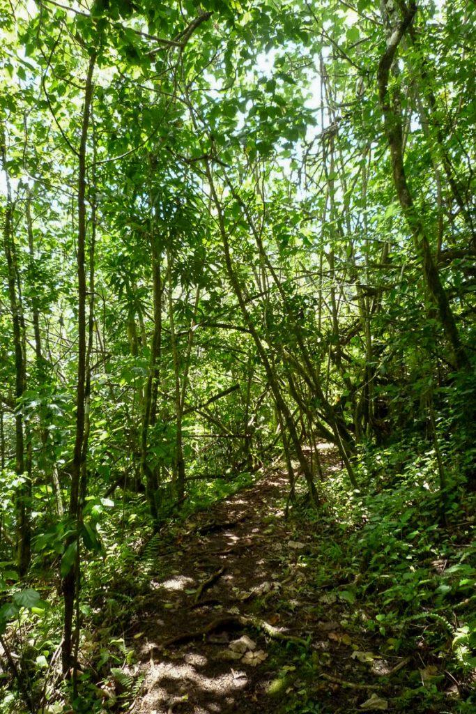 Het pad,Cross Island Trek, Rarotonga, Cook Eilanden (2011)